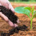 فروش کود ارگانیک برای افزایش میزان برداشت حبوبات