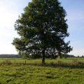 نرخ کود ارگانیک برای کشاورزی پایدار