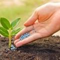 خرید انواع کود شیمیایی برای تامین کمبودهای خاک زراعی