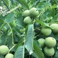 کود ارگانیک باکیفیت برای باغهای دماوند